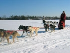 Chilly Dogs Dog Sled Trips (used by permission)
