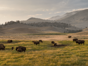 How to Plan a Yellowstone Vacation