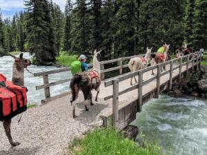 Yellowstone Trekking With Llamas