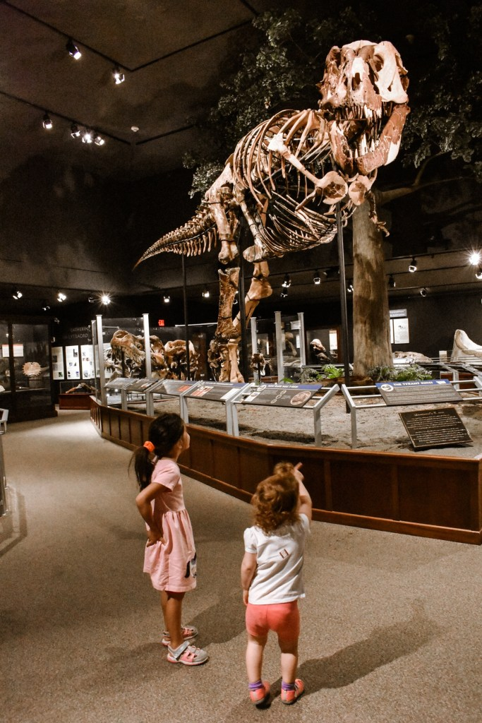 Kids staring at the bones of a Tyrannosaurus Rex at the Museum of the Rockies in Bozeman, Montana