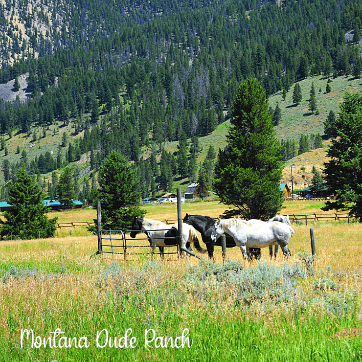 Horses grazing on a dude ranch in Montana.