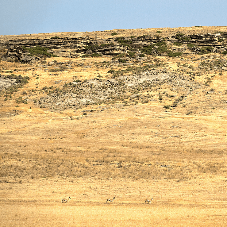 First People's Buffalo Jump State Park in Great Falls, Montana