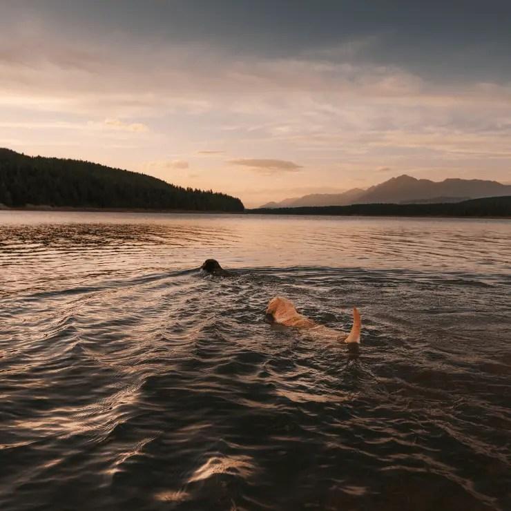 Lake Koocanusa in Montana