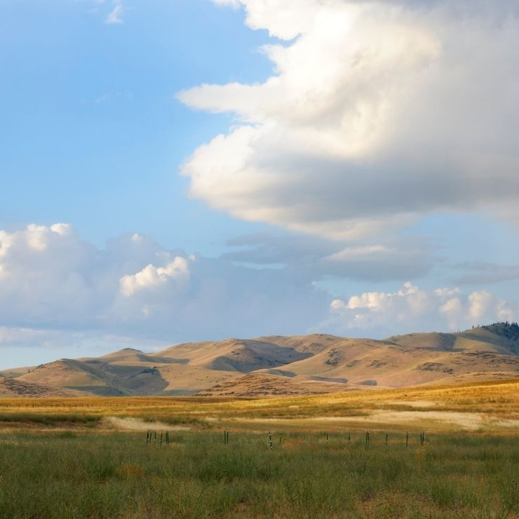 Rolling hills and green fields in Montana