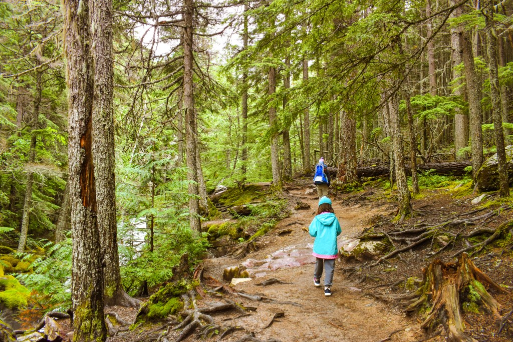 Family in Glacier National Park hiking the Avalanche Lake Trail