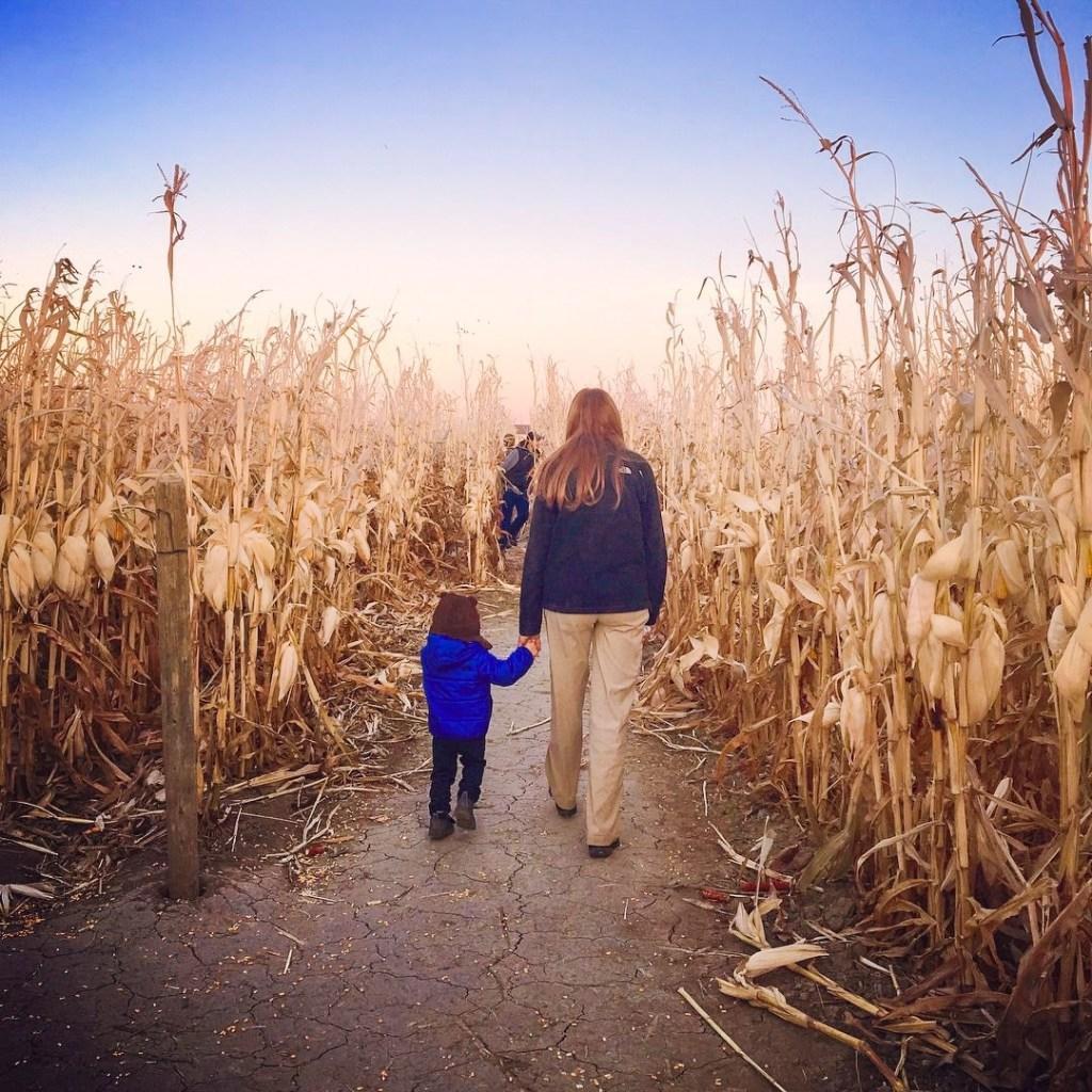 Autumn corn maze in Montana.