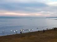 tarcoles-birds