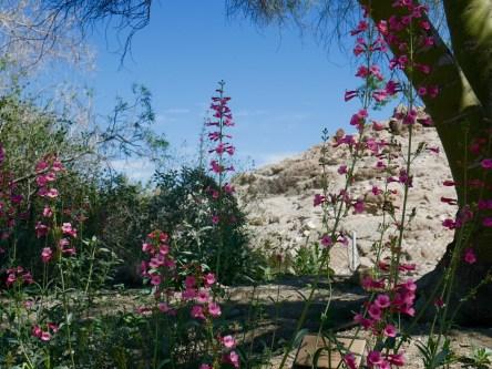 living desert plants travelnerdplans