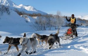 Iceland dogsledding