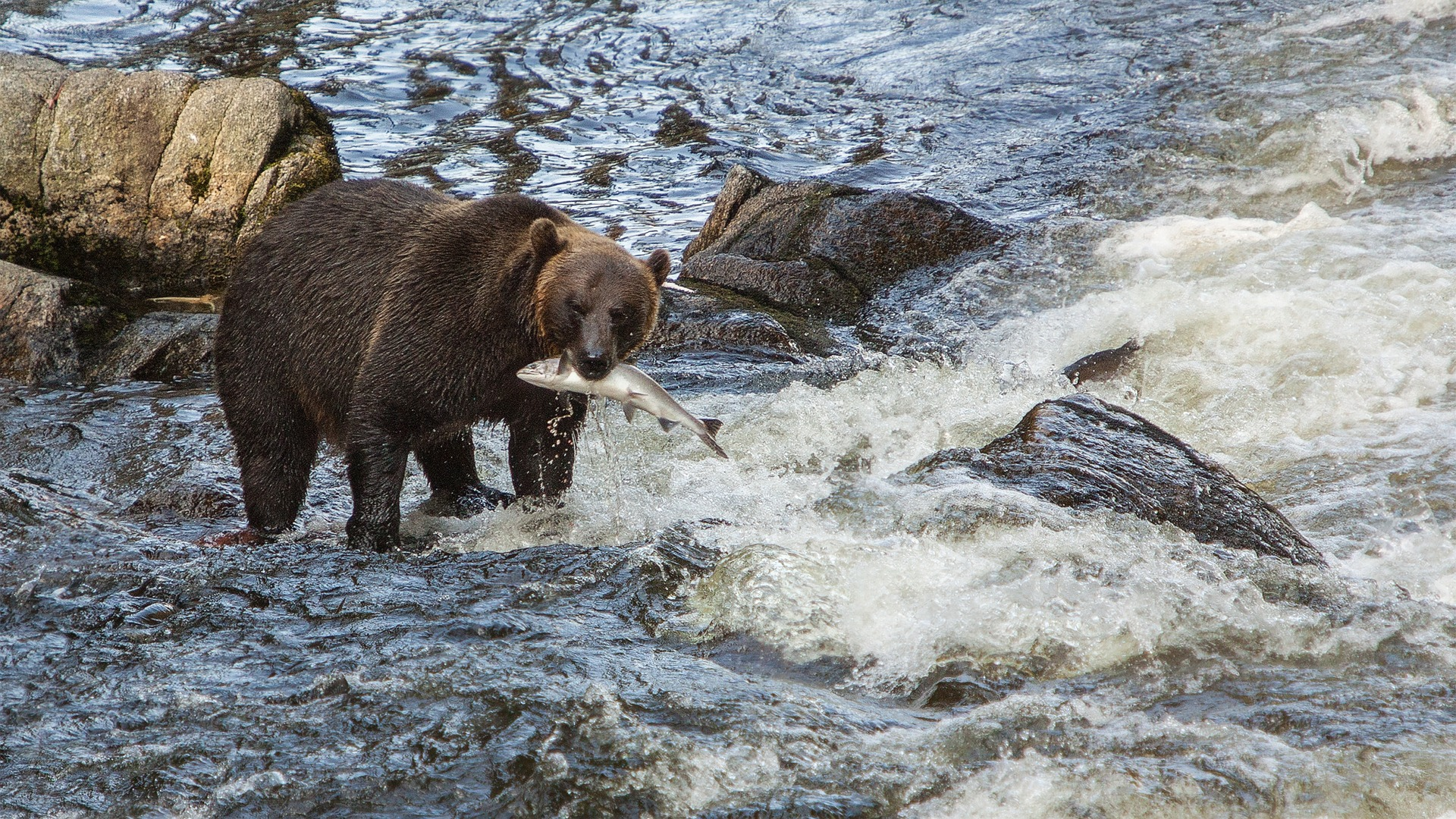 Where-to-see-bears-Alaska