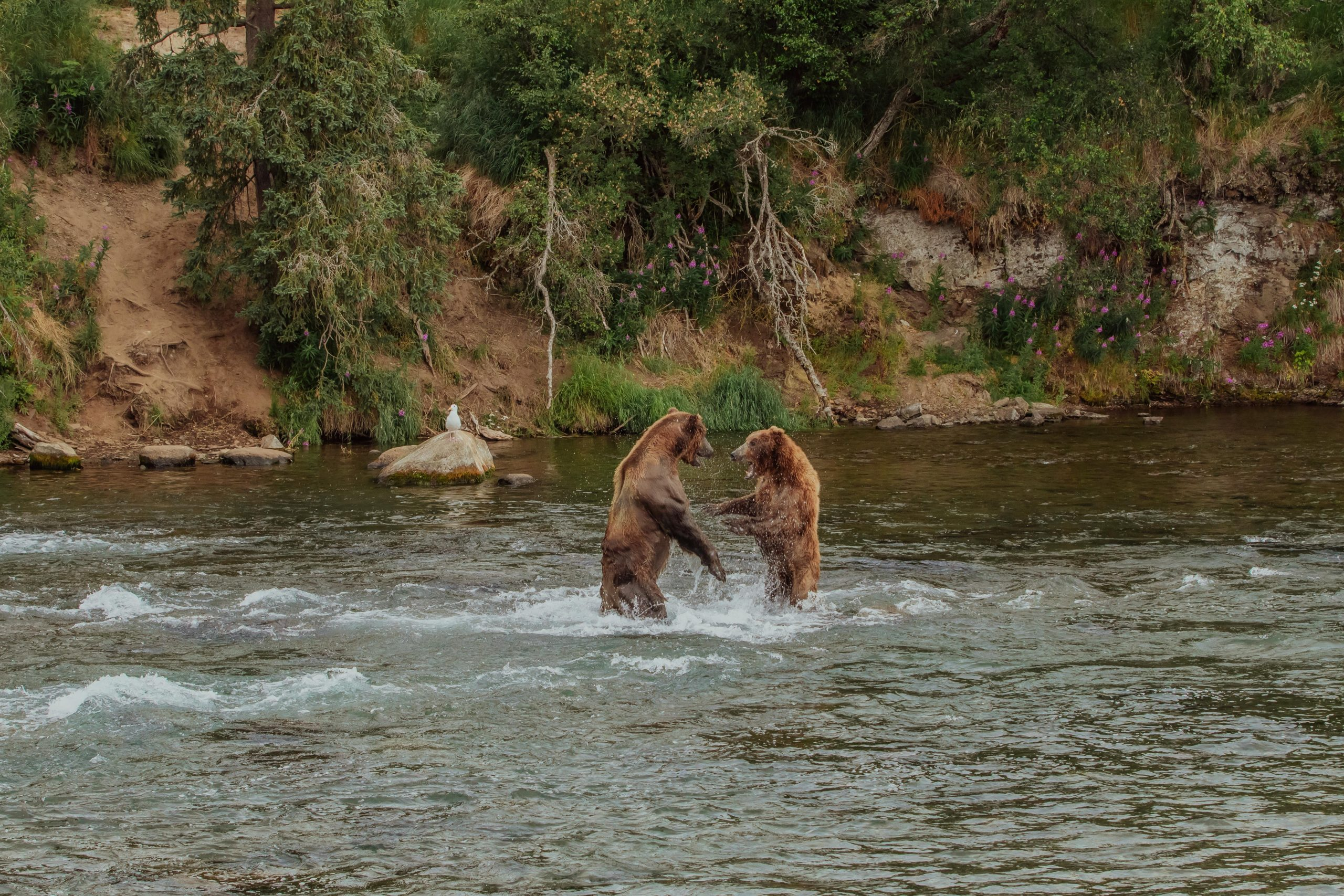 where to see bears in Alaska
