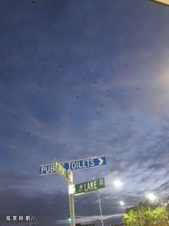 晚上狐蝠大舉出動,天空蝠影處處,果然是黑夜之神。