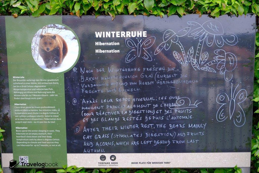 展示板會介紹熊的知識,簡單易吸收。