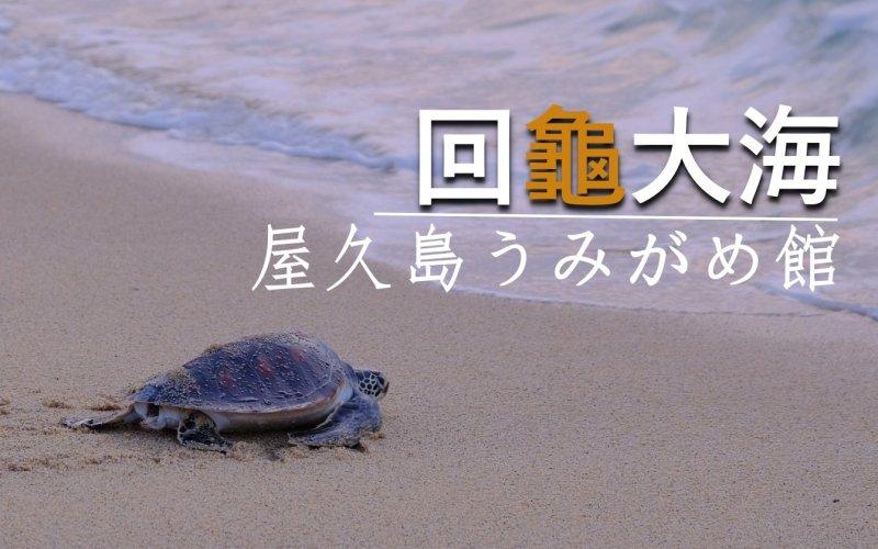 屋久島うみがめ館 回「龜」大海
