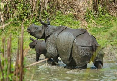 6 Best Rhino Parks in India