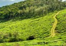 Exploring 5 Best Coffee Plantations in India