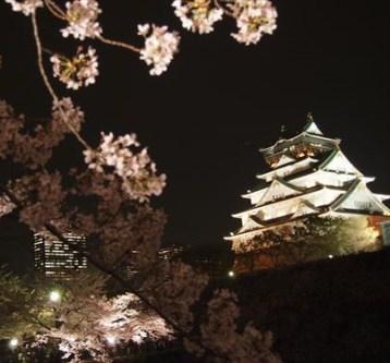 大阪城夜桜
