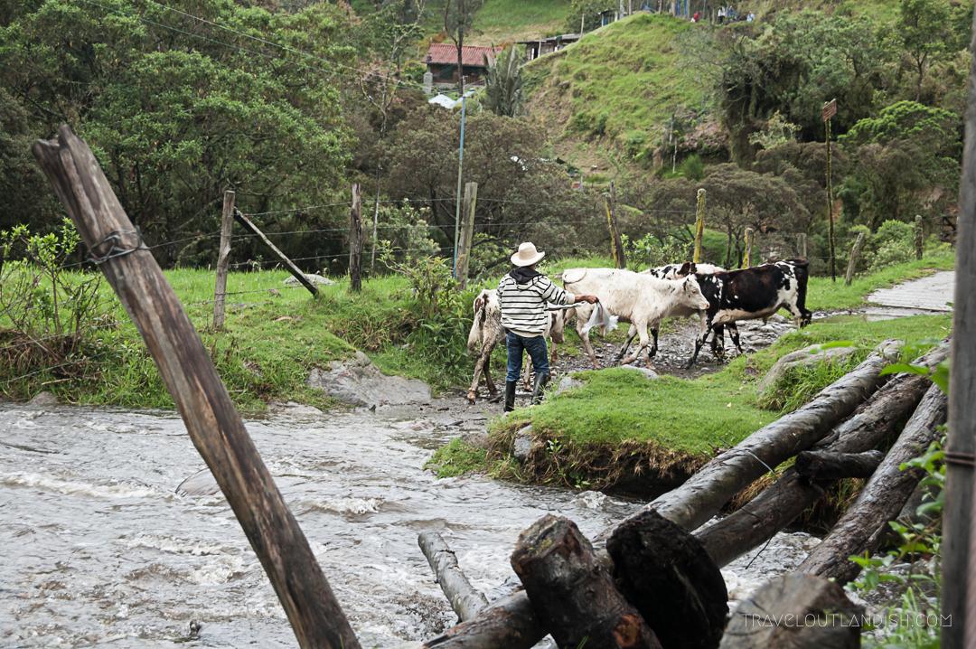 Valle de Cocora Hike - Colombian Cowboy