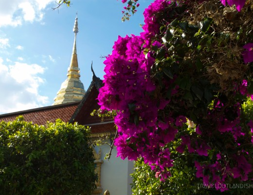 Pink flowers in the foreground of Doi Suthep