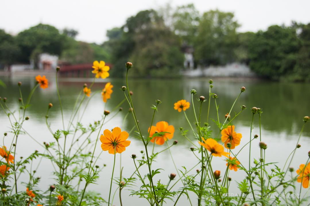 Flower around a Lake in Hanoi