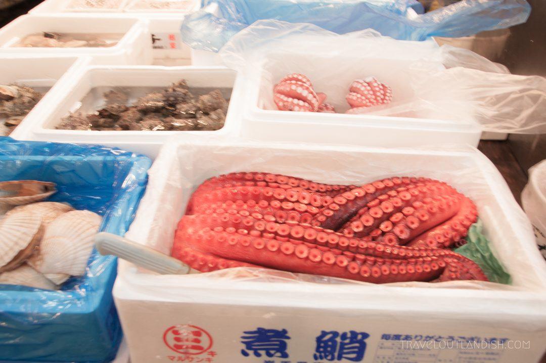 Squid at Tsukiji Fish Market