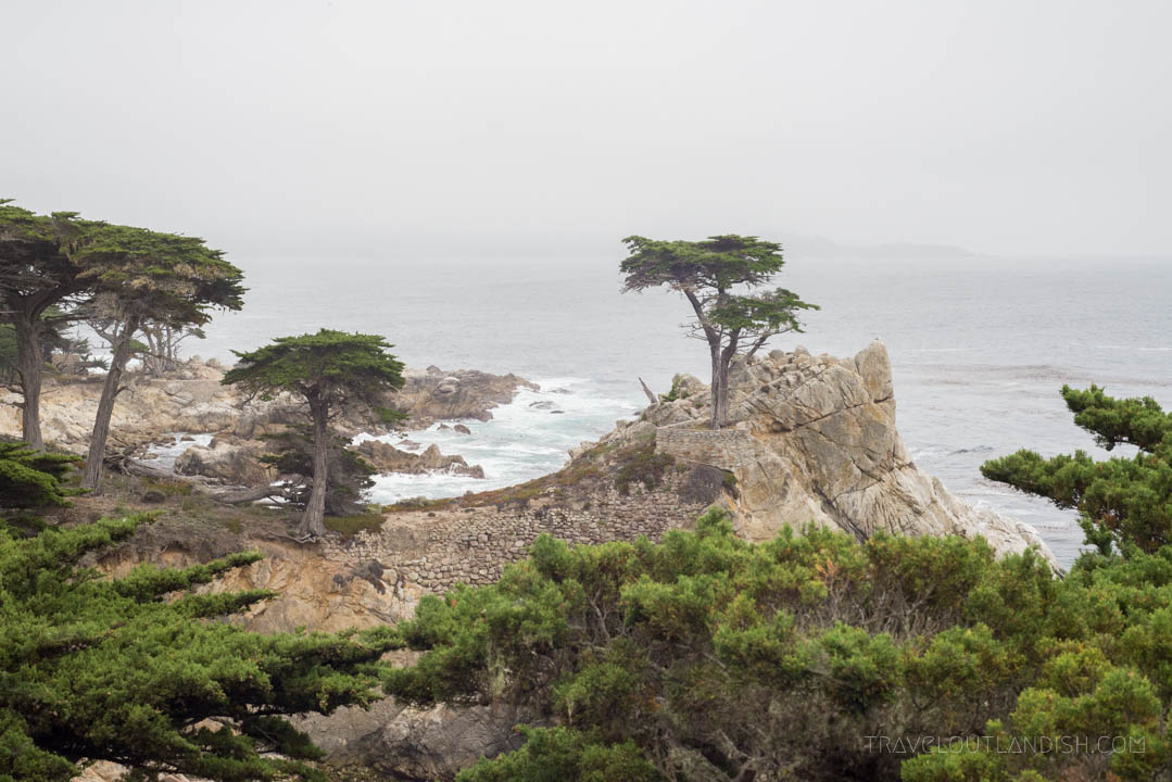 Lone Cypress on 17-Mile-Drive
