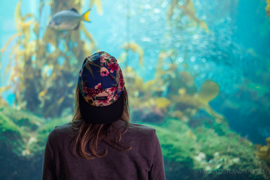 Things to do in Monterey - Kelp Forrest in the Monterey Bay Aquarium