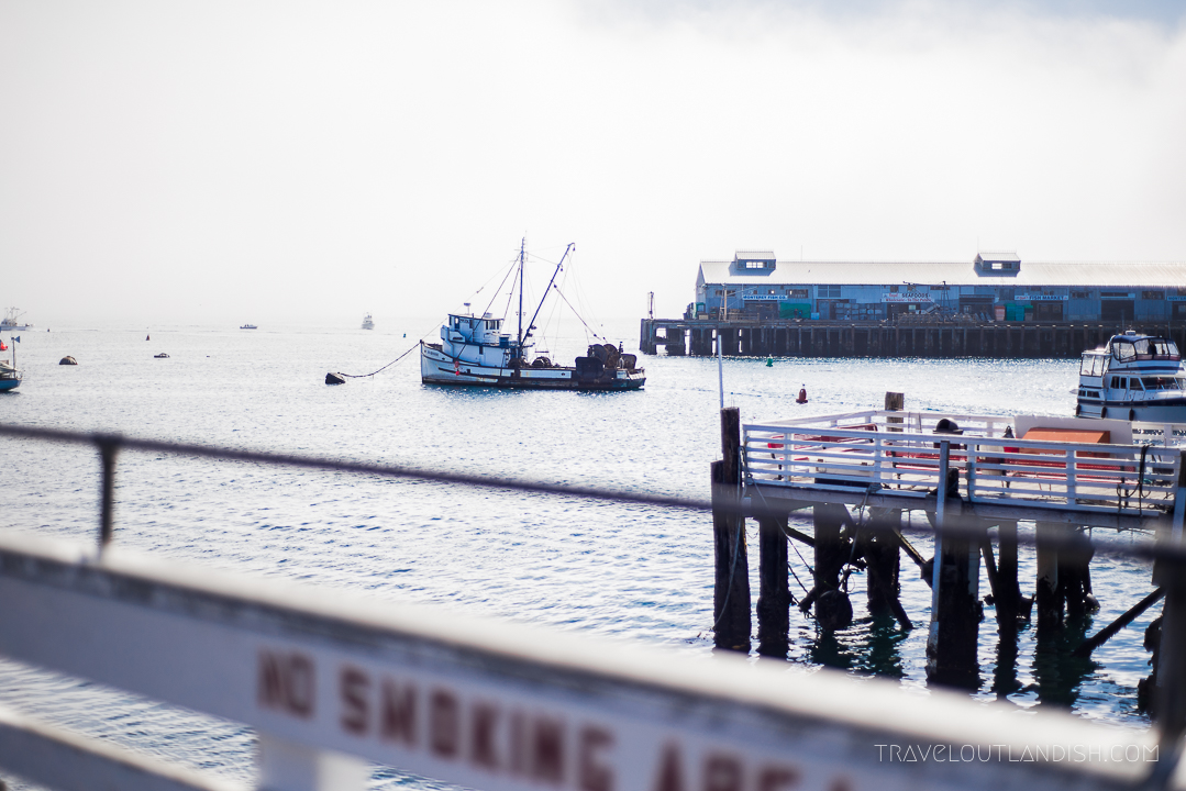 Whale Watching in California: View from the Monterey Bay Whale Watch Dock