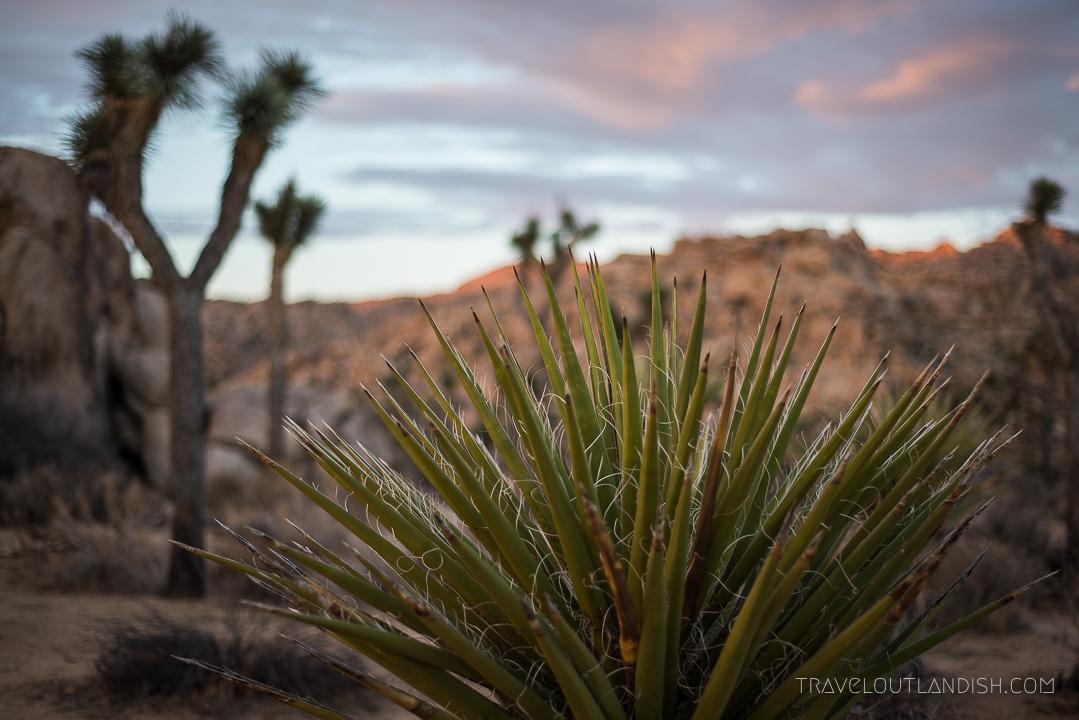 Things to do in Joshua Tree National Park - Desert Landscape in Joshua Tree