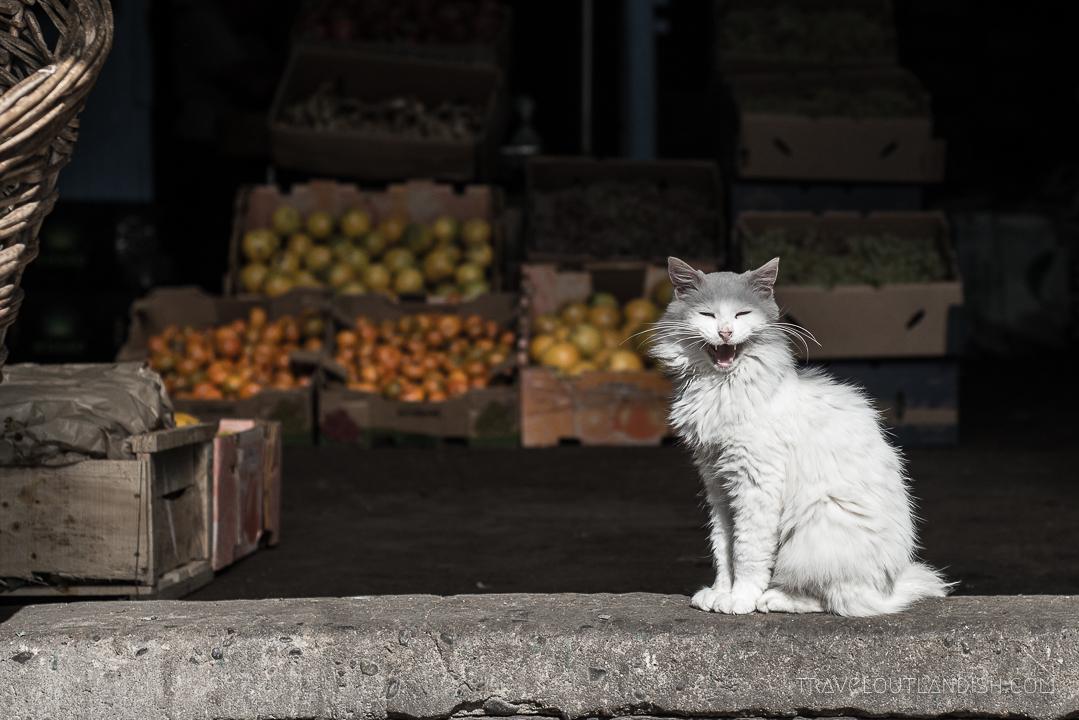 Photos of Chile - Fresh Market