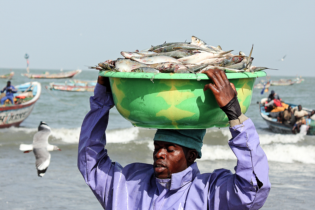 Tanji Fish Market - Man Carrying Fish