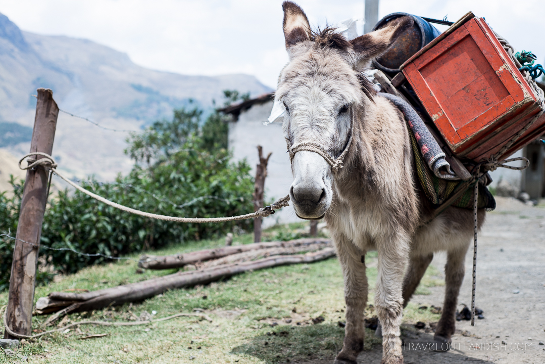 How to Plan a Trip to Peru - Travel Time