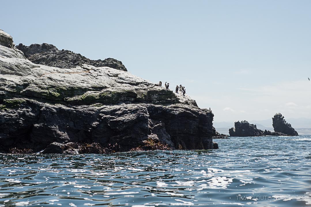 Fun Things to do in Chile - Isla Damas