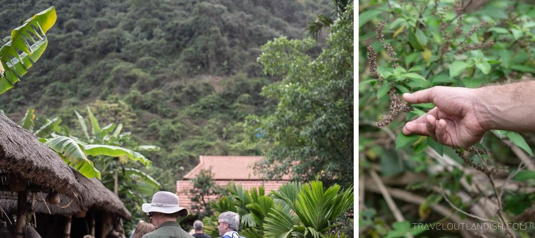 Visiting Viet Hai Village with Bhaya Cruises