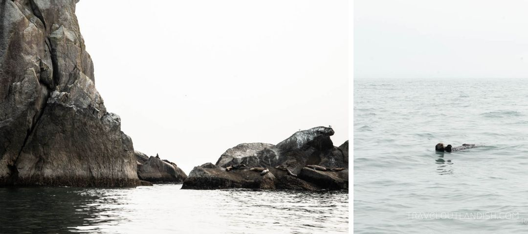 Sea lions on the rocks; otter floating in the bay at Kenai Fjords National Park