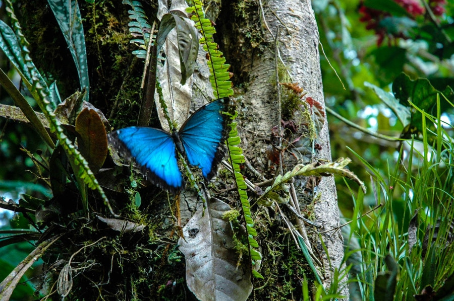 Butterfly, Milpe Cloud Forest, Ecuador  Travel Past 50