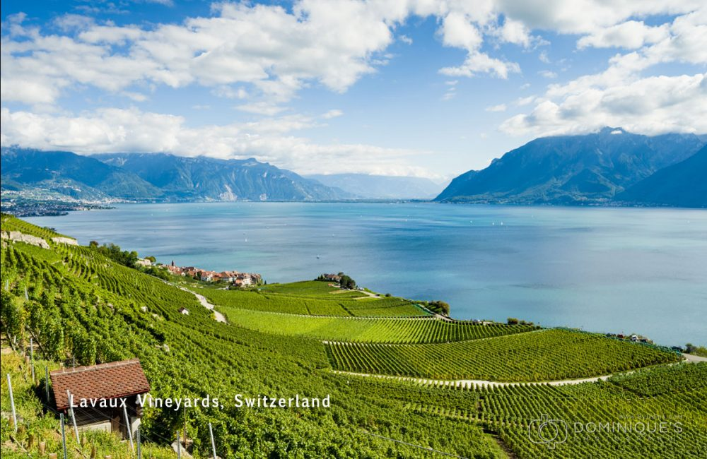 Lavaux-Vineyards