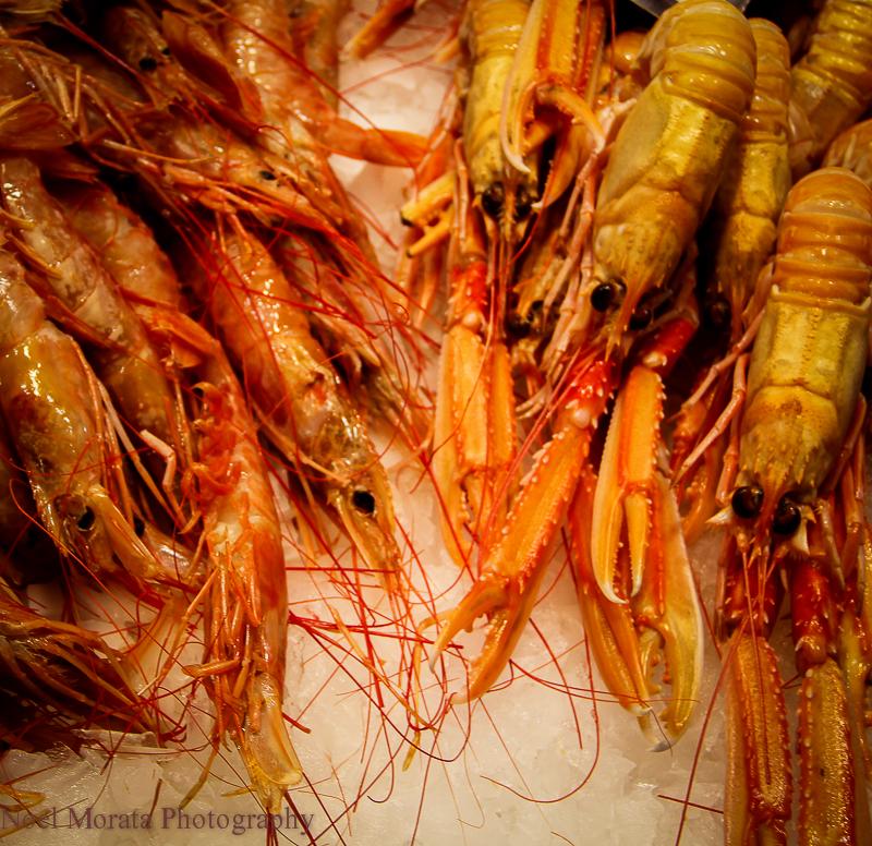 Beautiful displays of crustaceans