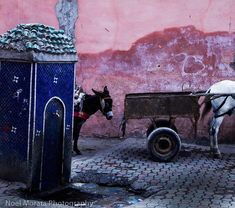 Donkeys and pink walls