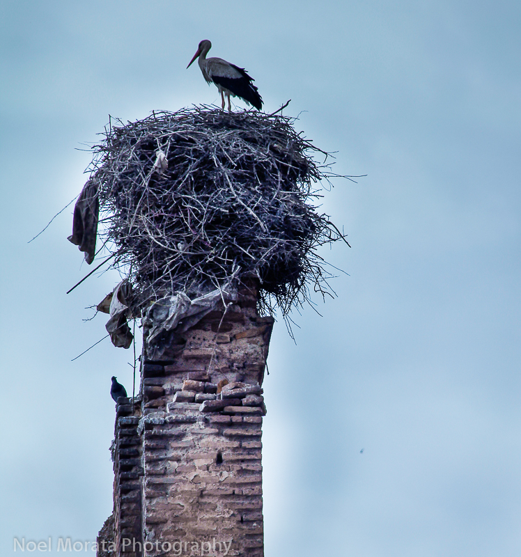 Storks with nest on old ruins in Marrakesh
