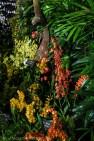 Asian orchid arrangement