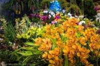 Hilo Orchid Show 2013