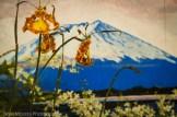 Hilo Orchid Show 2013 (46)