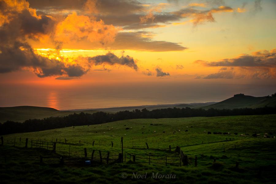 Kohala Mountain, Hawii