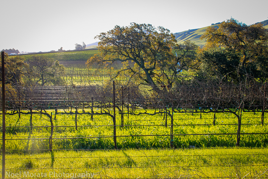 Wine country in Sonoma