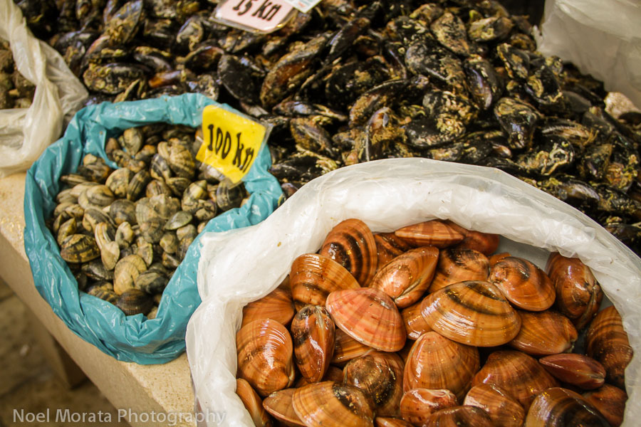 Split, Croatia fish market shell fish on display