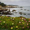 Pacific Grove looking out to Lovers Point