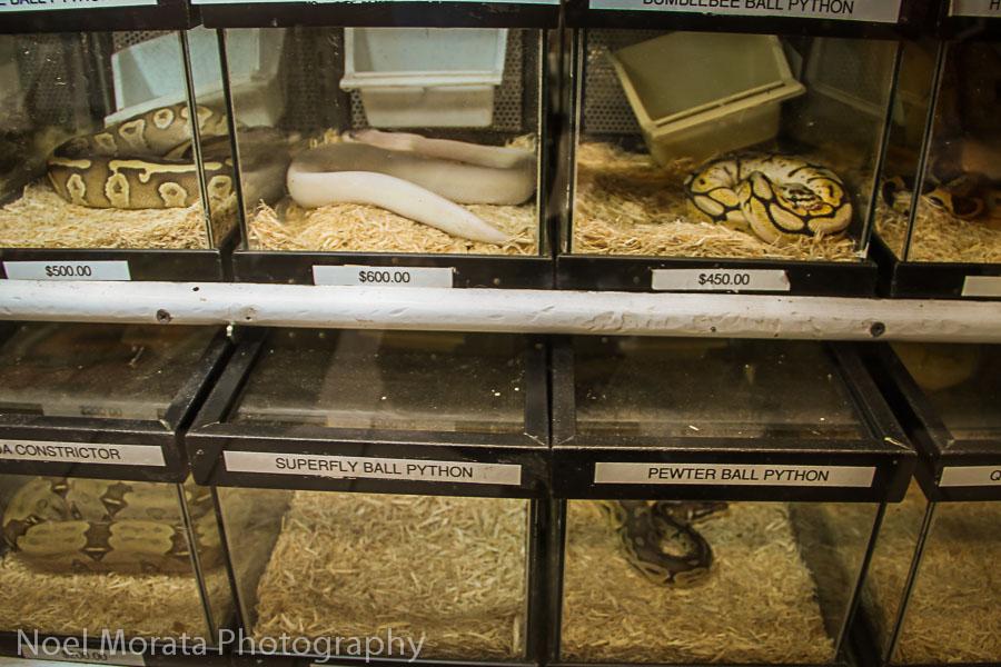 East Bay Vivarium, creepy crawlies and snakes