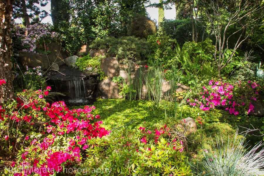 The azalea rock garden at Ferrari Carano Winery