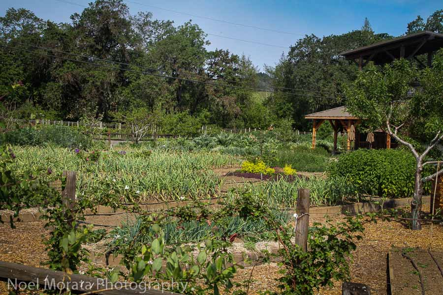Growing beds at Quivira at Dry Creek Valley